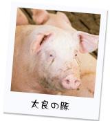 豚を愛する太良町の人々
